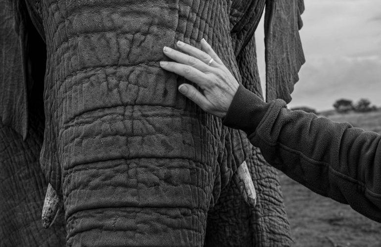Was Gedanken mit dem Dressieren von Elefanten zu tun haben